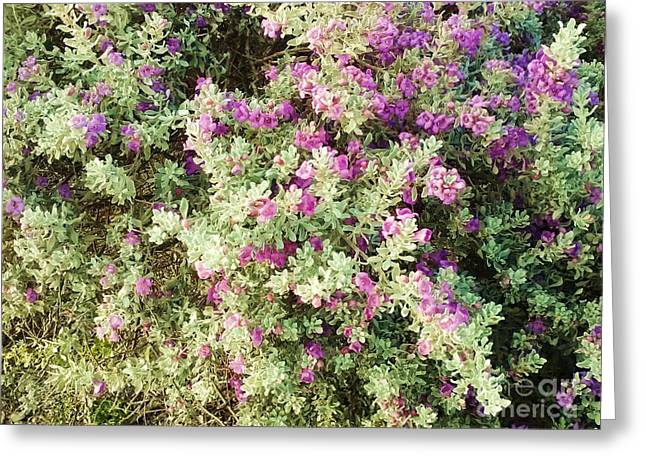 Beautiful Bush Greeting Card by Esther Rowden