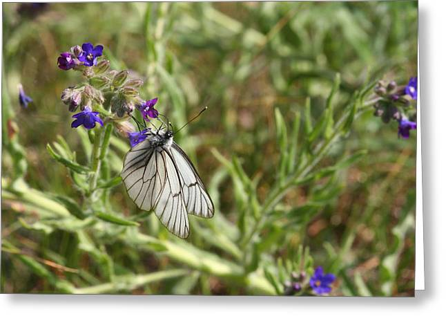 Beautiful Butterfly In Vegetation Greeting Card