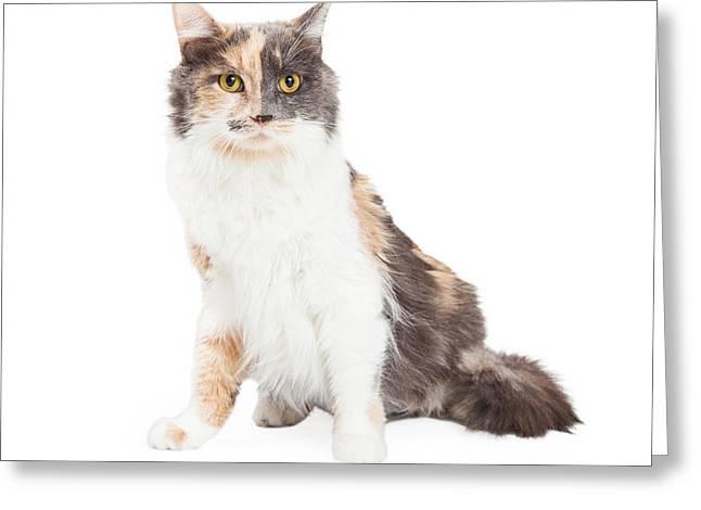 Beautiful Calico Cat Sitting Greeting Card by Susan Schmitz