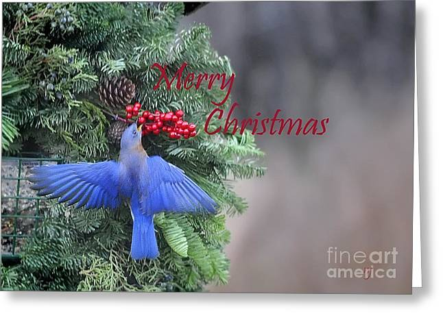 Beautiful Christmas Card Greeting Card by Nava Thompson