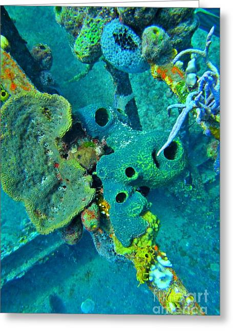 Beautiful Coral  Greeting Card by John Malone