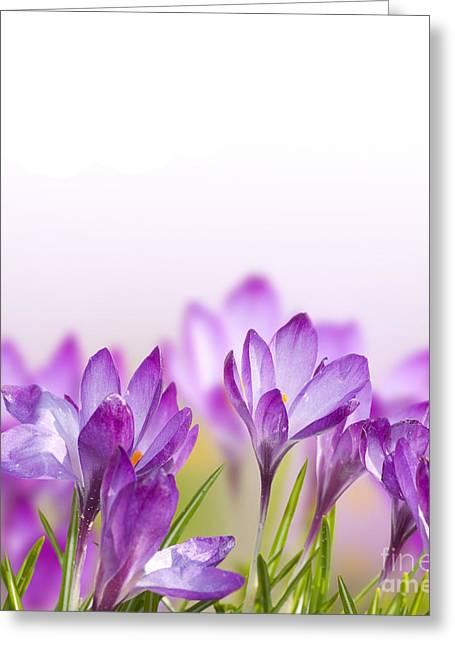 Beautiful Crocus Flower Greeting Card
