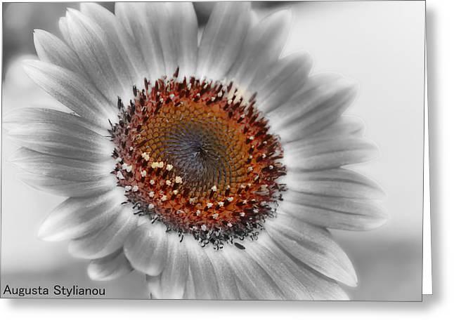 Beautiful Flower Greeting Card by Augusta Stylianou