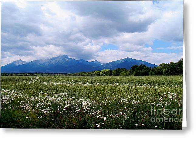 Beautiful Flower Field Around Tatra Moutains Greeting Card by Maja Sokolowska