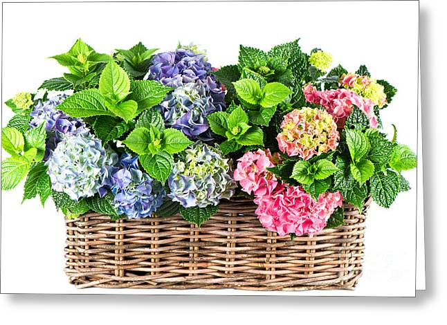 Beautiful Flowers In Basket Greeting Card by Boon Mee