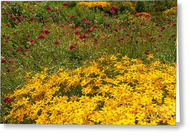 Beautiful Flowers In Gold And Burgundy Greeting Card by Louise Heusinkveld