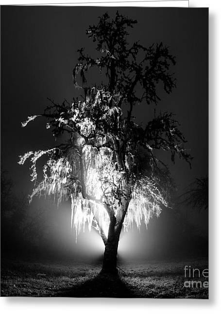 Beautiful Foggy Night 1 Greeting Card