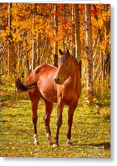 Beautiful Horse In The Autumn Aspen Colors Greeting Card by James BO  Insogna