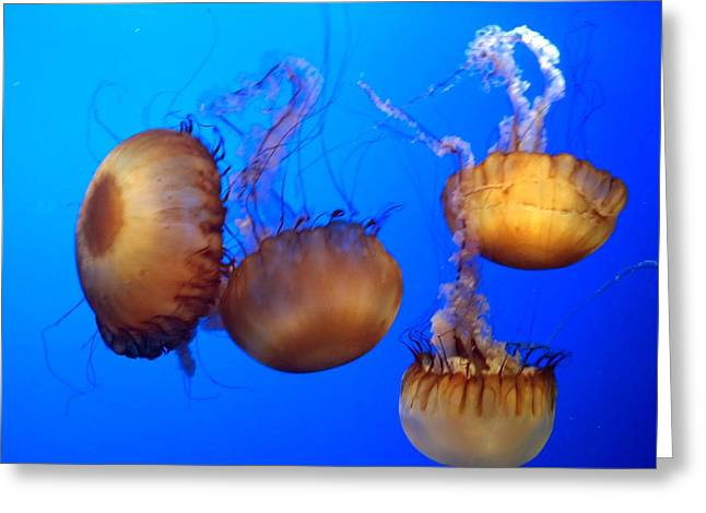 Greeting Card featuring the photograph Beautiful Jellyfish by Janice Spivey