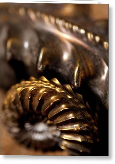 Beautiful Jurassic Pyrites Gold Ammonites Greeting Card by Paul D Stewart