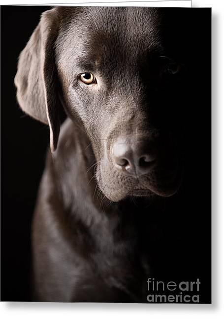 Beautiful Low Key Labrador Greeting Card