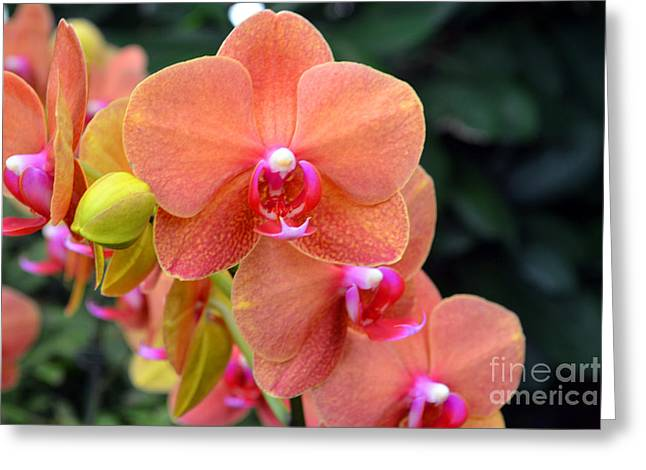 Beautiful Orchids Greeting Card by Anne Marie Corbett