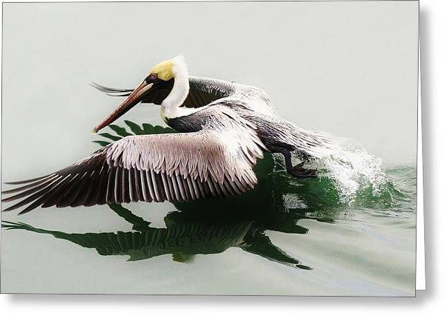 Beautiful Pelican Greeting Card by Paulette Thomas