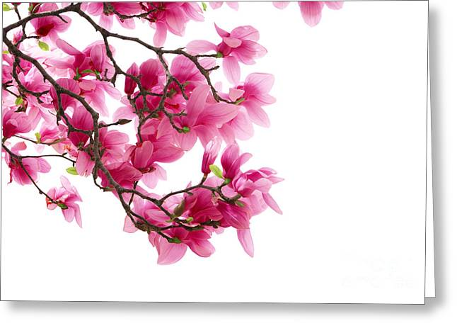 Beautiful Pink Flower Greeting Card by Boon Mee