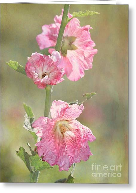 Beautiful Pink Hollyhock Flowers Greeting Card by Sabrina L Ryan