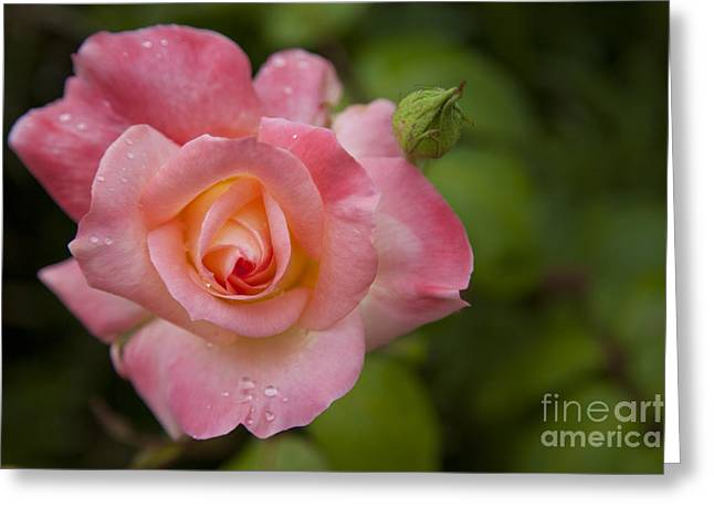 Greeting Card featuring the photograph Shades Of Pink And Green by David Millenheft