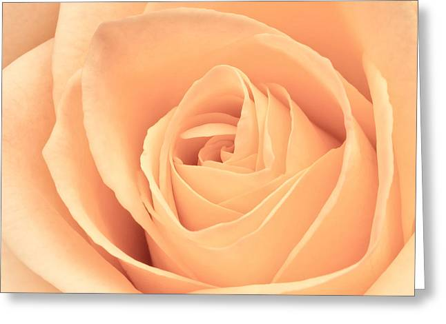 Beautiful Pink Rose Square Format Greeting Card by Edward Fielding