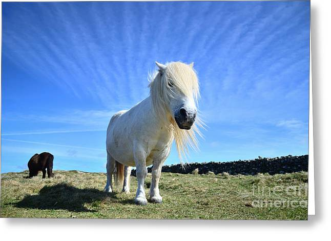 Beautiful Poney Grazing Near The Lizard - Cornwall Greeting Card by OUAP Photography