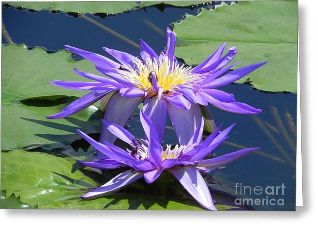Greeting Card featuring the photograph Beautiful Purple Lilies by Chrisann Ellis