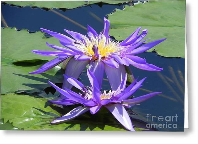 Beautiful Purple Lilies Greeting Card by Chrisann Ellis