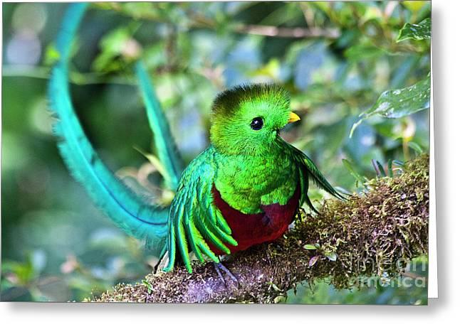 Beautiful Quetzal 5 Greeting Card by Heiko Koehrer-Wagner