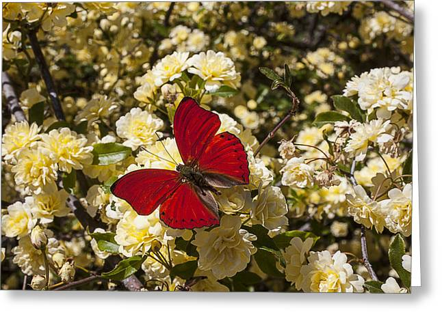 Beautiful Red Butterfly Greeting Card by Garry Gay