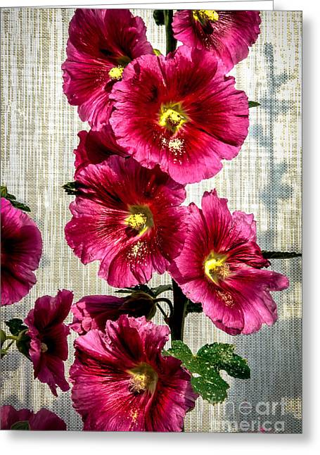 Beautiful Red Hollyhock Greeting Card by Robert Bales
