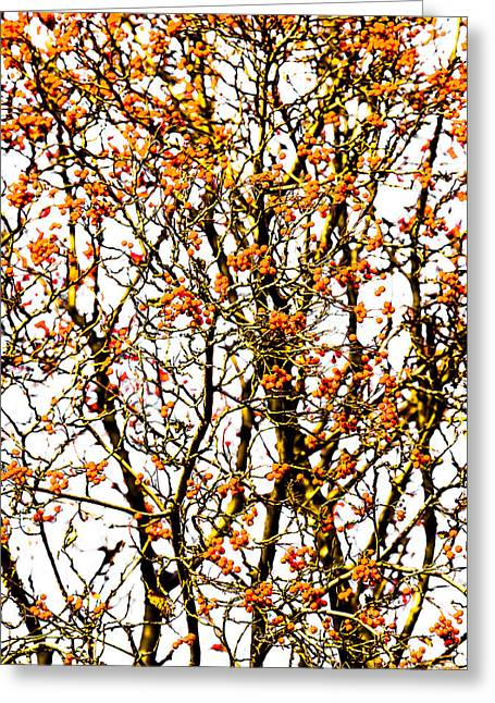 Beautiful Rowan 10 - Square Greeting Card