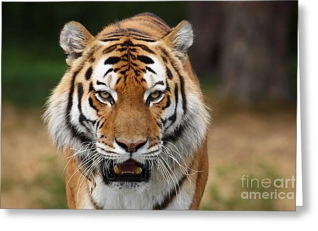 Beautiful Siberian Tiger Greeting Card by Boon Mee