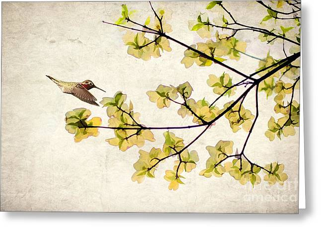 Beautiful Spring Greeting Card by Darren Fisher