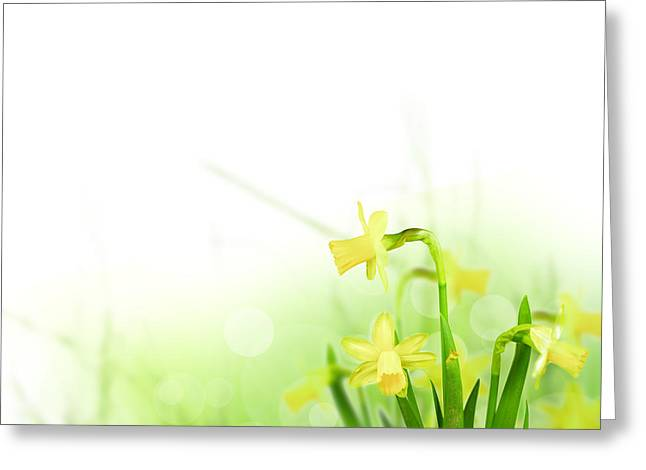 Beautiful Spring Flowers Greeting Card by Boon Mee
