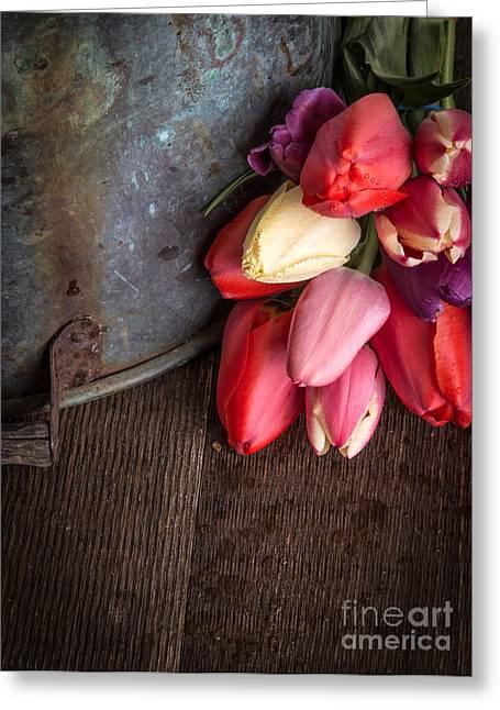 Beautiful Spring Tulips Greeting Card