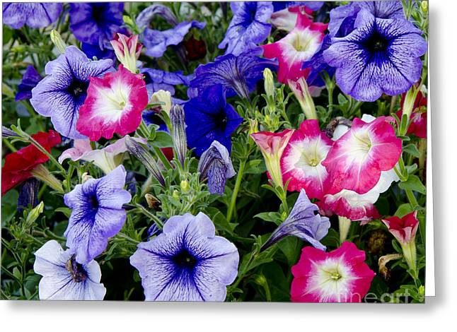 Beautiful Summer Annuals Greeting Card by Wilma  Birdwell