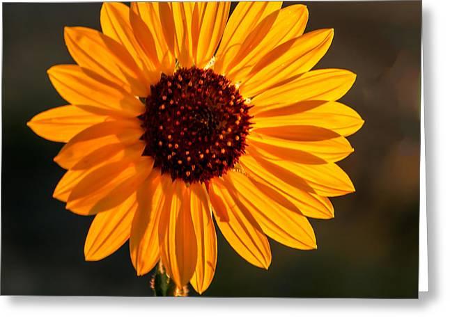 Beautiful Sunflower Greeting Card
