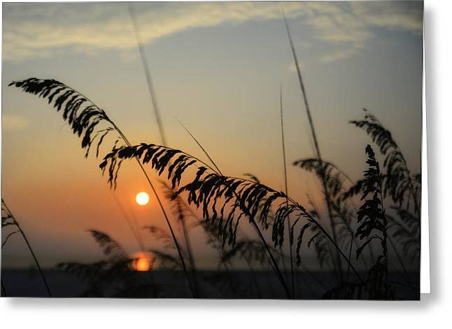 Beautiful Sunrise Greeting Card by Tim Palmer