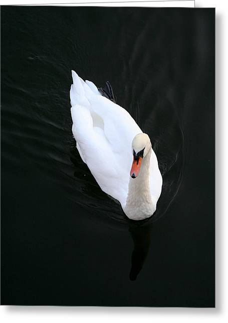 Beautiful Swan Greeting Card by Allan Millora