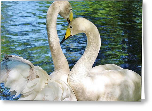 Beautiful Swans Greeting Card by Paulette Thomas