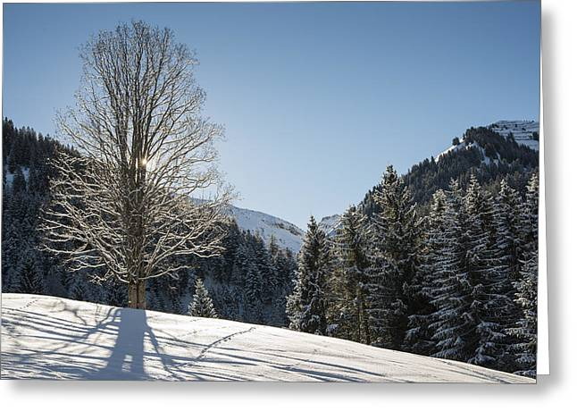 Beautiful Tree In Snowy Landscape On A Sunny Winter Day Greeting Card