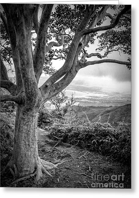 Beautiful Tree Looking Down On A Tropical Valley Greeting Card by Edward Fielding