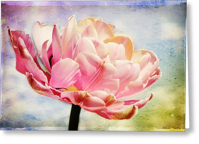 Greeting Card featuring the photograph Beautiful Tulip by Trina  Ansel
