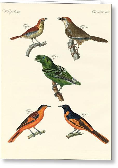 Beautiful Und Strange Foreign Birds Greeting Card by Splendid Art Prints