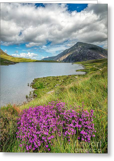Beautiful Wales Greeting Card by Adrian Evans