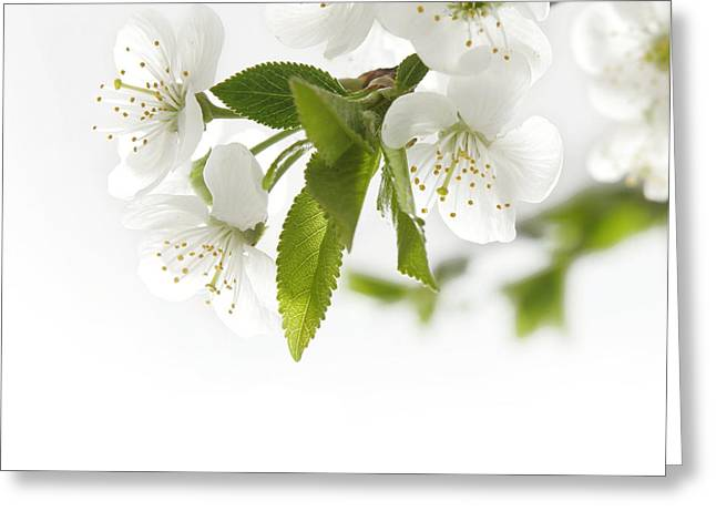 Beautiful White Flower Greeting Card by Boon Mee