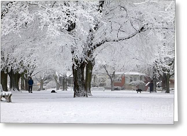 Beautiful Winter Park Greeting Card by Charline Xia