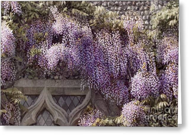 Beautiful Wisteria Greeting Card