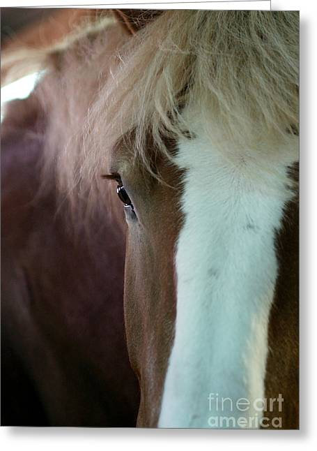 Greeting Card featuring the photograph Beautiful Within Him Was The Spirit - 1 by Linda Shafer