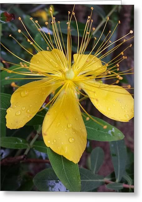 Beautiful Yellow Flower Greeting Card
