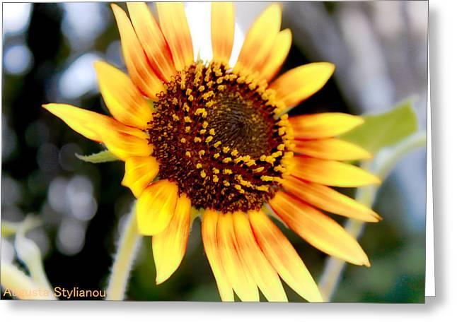Beautifull Sun Flower Greeting Card by Augusta Stylianou