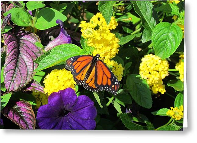 Greeting Card featuring the photograph Beauty All Around by Cynthia Guinn