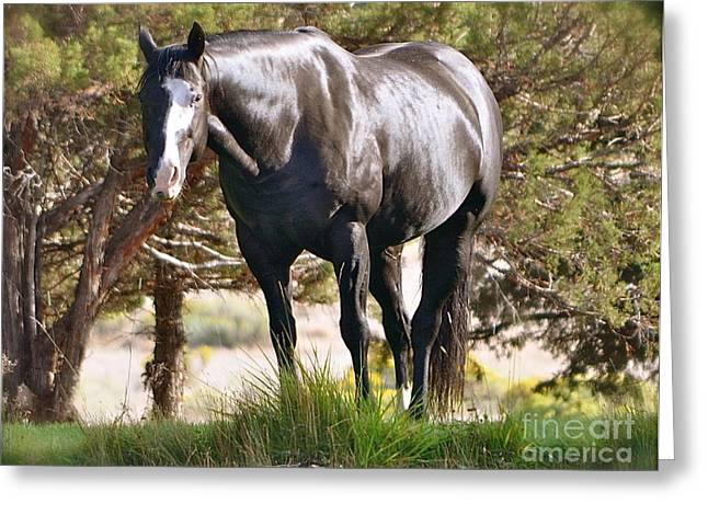 Greeting Card featuring the photograph Beauty by Barbara Dudley